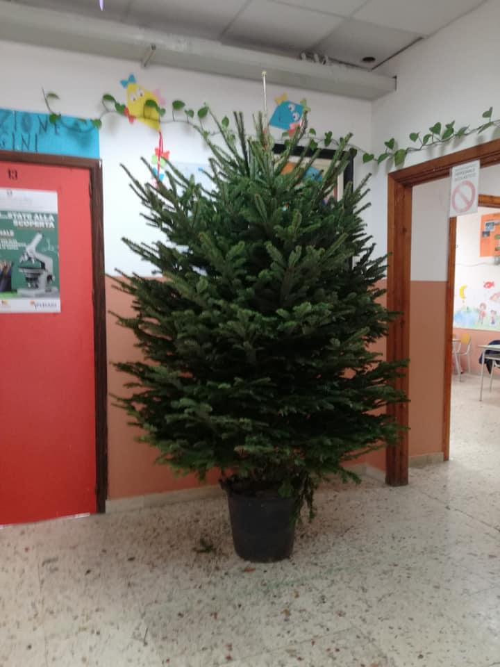 Albero Di Natale 6 Mt.Bagheria Regalati Alle Scuole Elementari 6 Alberi Di Natale Da